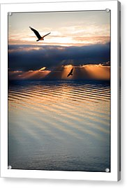 Ospreys Acrylic Print by Mal Bray