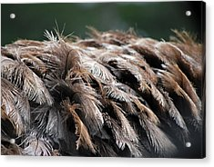 Ostrich Feathers Acrylic Print by Teresa Blanton