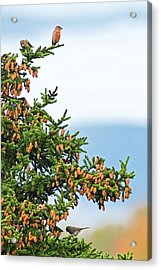 Out On A Limb # 2 Acrylic Print by Matt Plyler