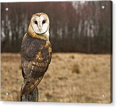 Owl Looking At Camera Acrylic Print by Jody Trappe Photography