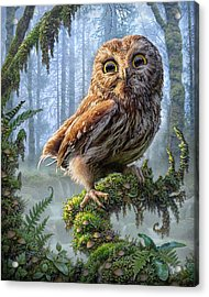 Owl Perch Acrylic Print by Phil Jaeger