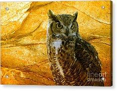 Owl Acrylic Print by Teresa Zieba