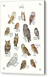 Owls Acrylic Print by Amy Hamilton