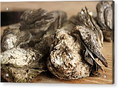 Oyster Roast Acrylic Print by Greg Simmons