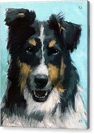 Ozzie Animal Dog Portrait Acrylic Print by Linda Apple