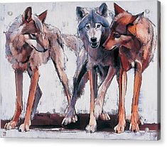 Pack Leaders Acrylic Print by Mark Adlington