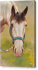Paint Horse Pause Acrylic Print by Tracie Thompson