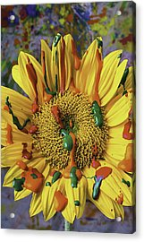 Painted Sunflower Acrylic Print by Garry Gay