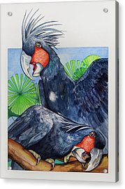 Palm Cockatoos Acrylic Print by Robert Lacy