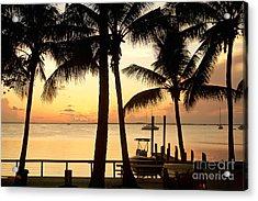 Palm Sunset Acrylic Print by Judy Kay