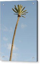 Palm Tree Aganist The Sky Acrylic Print by Andrea Mazzocchetti