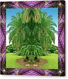 Palm Tree Ally Acrylic Print by Bell And Todd