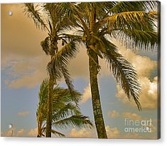 Palm Trees Acrylic Print by Silvie Kendall