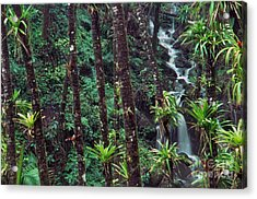 Palm Trunks And Waterfall El Yunque Acrylic Print by Thomas R Fletcher