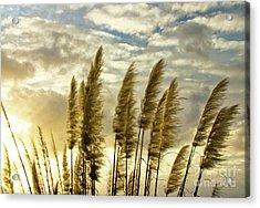 Pampas Grass Acrylic Print by Julia Hiebaum