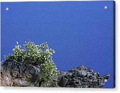 Paradise For Backpackers - Crater Lake In Crater National Park - Oregon Acrylic Print by Christine Till