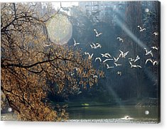 Paris, Buttes Chaumont Acrylic Print by Calinore