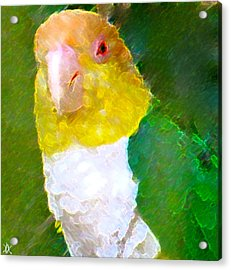 Parrot Grace Acrylic Print by Debra     Vatalaro