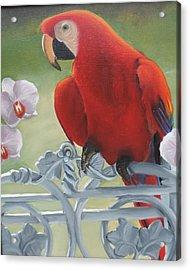 Parrot Acrylic Print by Katiana Valdes