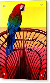 Parrot Sitting On Chair Acrylic Print by Garry Gay