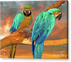Parrots At Sunset Acrylic Print by Michael Durst