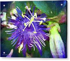Passion Flower Acrylic Print by Mona Stut