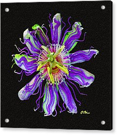 Passion Perfect Acrylic Print by Claudia O'Brien