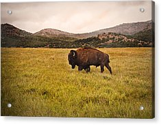 Past His Prime Acrylic Print by Tamyra Ayles
