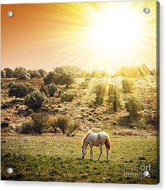 Pasturing Horse Acrylic Print by Carlos Caetano