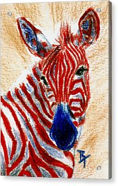 Patriotic Zebra Aceo Acrylic Print by Brenda Thour