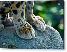 Paws For Effect Acrylic Print by Gene Sizemore
