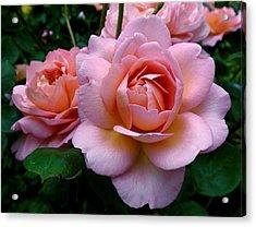 Peachy Pink Acrylic Print by Rona Black