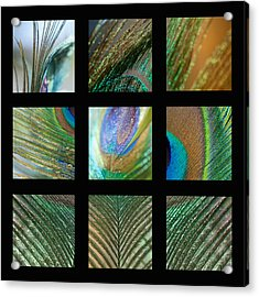 Peacock Feather Mosaic Acrylic Print by Lisa Knechtel