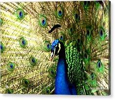Peacock Acrylic Print by Toon De Zwart