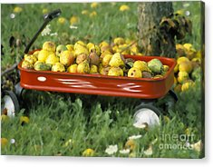 Pears In A Wagon Acrylic Print by Gordon Wood