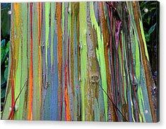 Peeling Bark- St Lucia. Acrylic Print by Chester Williams