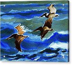 Pelican Flight  10-15-15 Acrylic Print by Julianne Felton