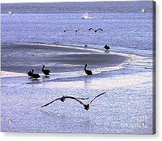 Pelican Island Acrylic Print by Al Powell Photography USA