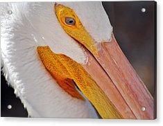 Pelican Twist Acrylic Print by Marty Koch