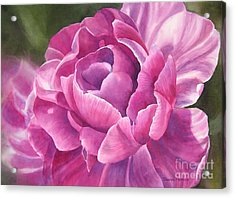 Peony Tulip Acrylic Print by Sharon Freeman