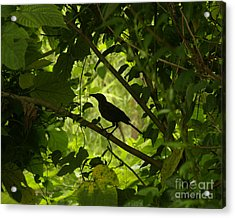 Perched In Green  Acrylic Print by Jack Norton