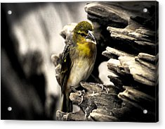 Perched Acrylic Print by Martin Newman