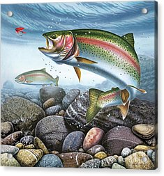 Perfect Drift Rainbow Trout Acrylic Print by JQ Licensing