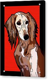 Persian Greyhound - Saluki Acrylic Print by Alexey Bazhan