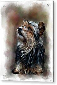 Pet Dog Portrait Acrylic Print by Michael Greenaway