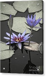 Petals Floating On Water Acrylic Print by Ella Kaye Dickey