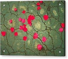 Petals On Asphalt Acrylic Print by Anna Villarreal Garbis