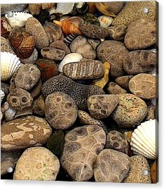 Petoskey Stones With Shells L Acrylic Print by Michelle Calkins