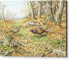 Pheasants With Blue Tits Acrylic Print by Carl Donner