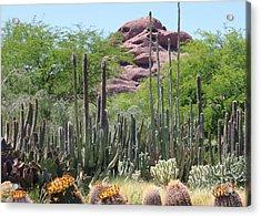 Phoenix Botanical Garden Acrylic Print by Carol Groenen